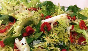 Rosehip Salad Rosehip Recipe
