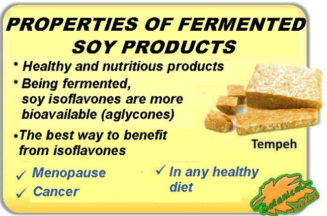 Medicinal properties of soy fermented products, such as tempeh or miso, because of its isoflavones