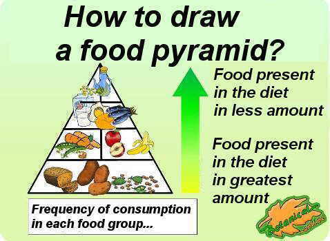 Visual scheme on how to draw a food pyramid