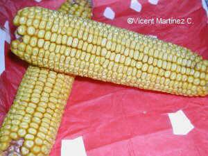 Photo of corncobs