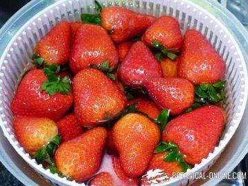 Washing strawberries