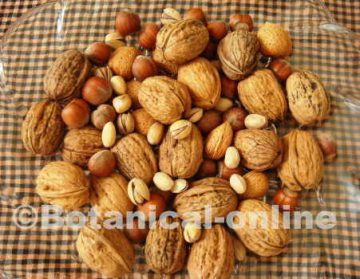 Photo of nuts