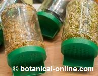 Photo of seeds germinators