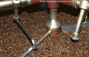 Picture of freshly roasted coffee beans