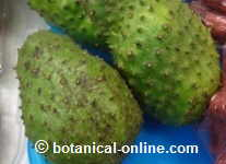 Photography soursop