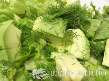 lettuce and avocado salad with some fennel leaves