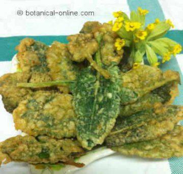 Breaded Cowslip leaves