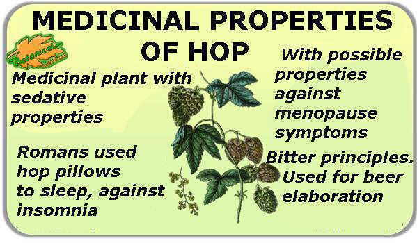 medicinal properties of hops
