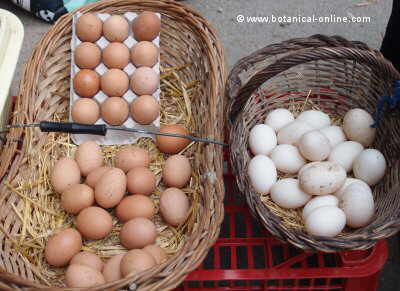 Different colour eggs