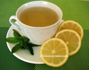 mint infusion