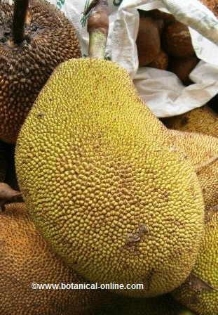 Jackfruit detail