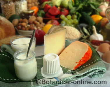 Milk and dairy products: yogurt and cheese