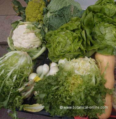 Foto de verduras
