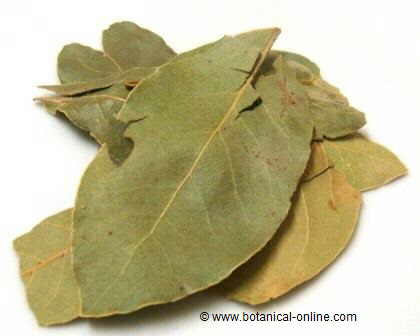 sweet bay leaves