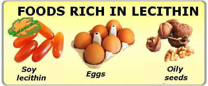foods rich in lecithin