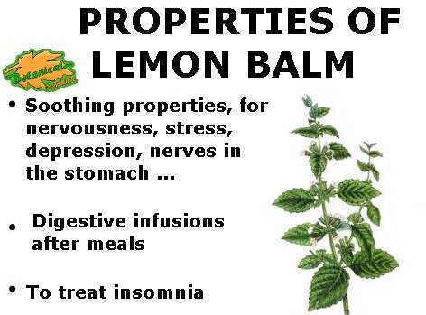 Main medicinal properties of lemon balm