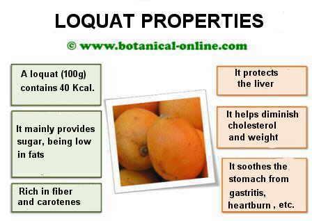loquat properties