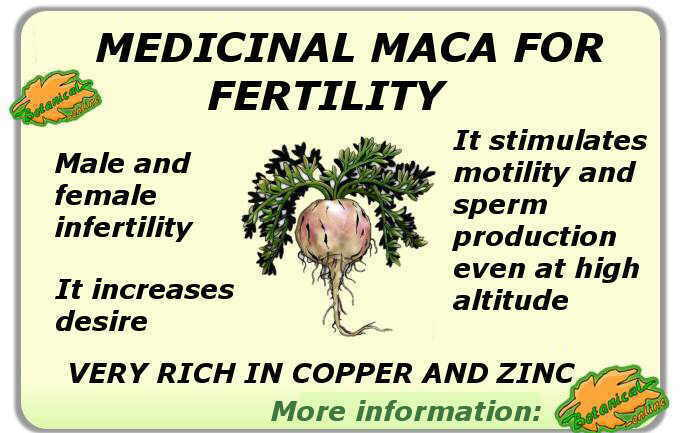 Summary of the properties of maca