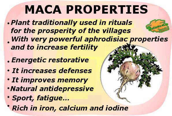 main healing properties of maca and its health benefits.