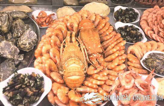 Photo of shellfish
