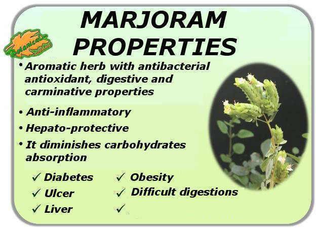 Medicinal properties of marjoram