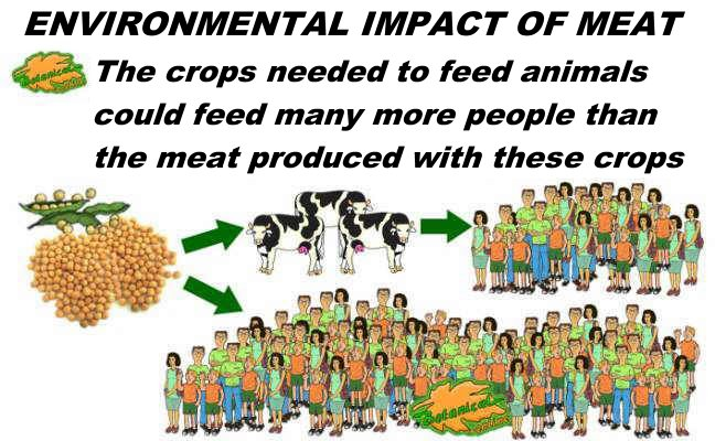 Ecological impact of meat to feed animals and people, vegetarian diet