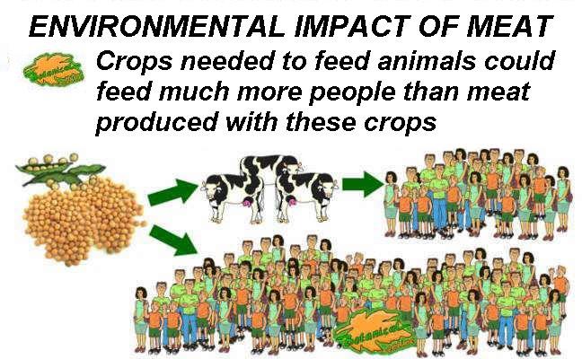 Environmental impact of meat