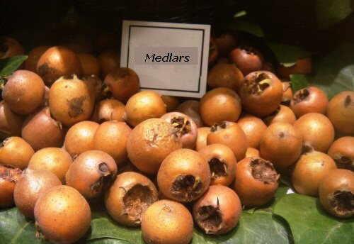 common medlars