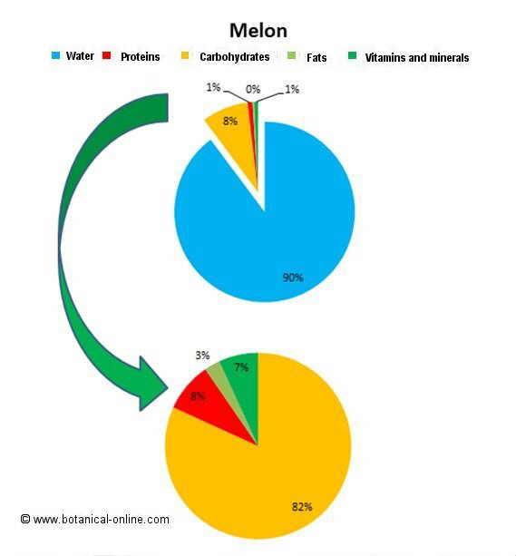 melon_composition
