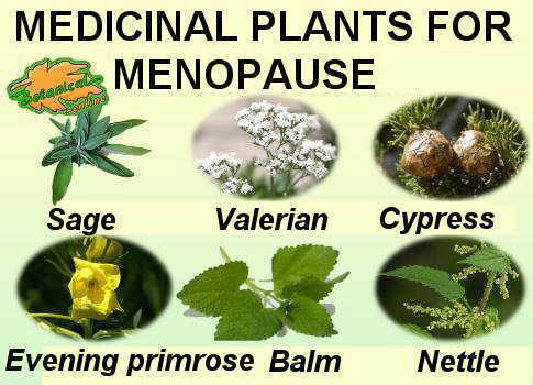main medicinal plants used in the natural treatment of menopause
