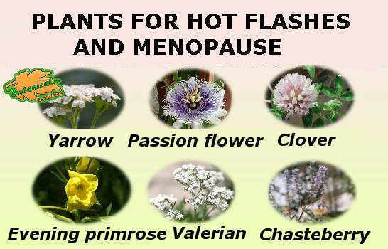main medicinal plants used in the natural treatment of hot flushes in menopause