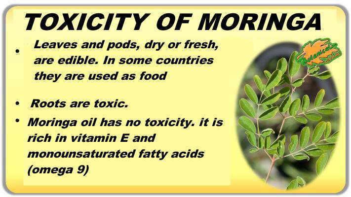moringa toxicity