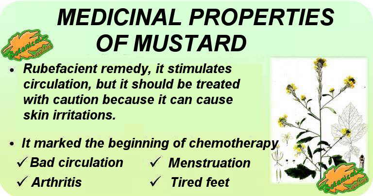Properties and benefits of mustard and its main medicinal uses.