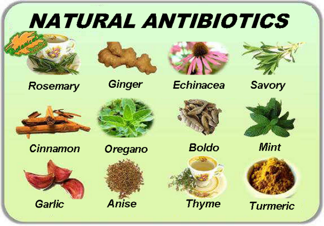 Antibiotics medicinal plants natural medicine
