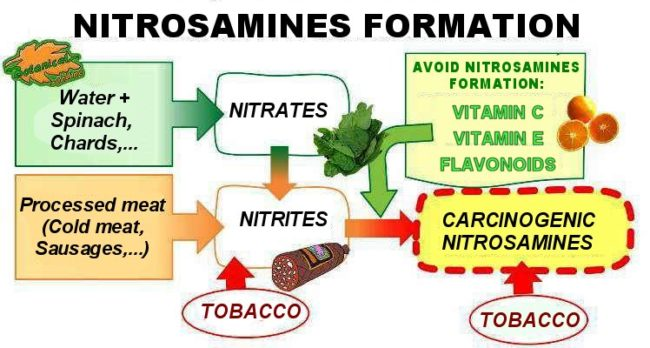 Scheme of foods rich in nitrates, nitrites and nitrosamines