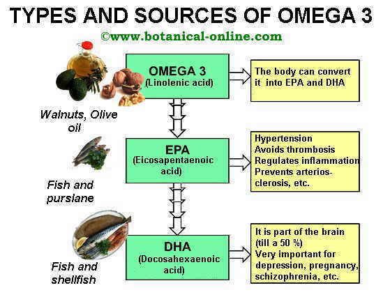 Types of omega 3 ALA, EPA, DHA, and their sources