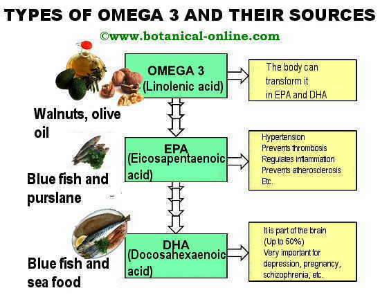 Types and sources of omega 3