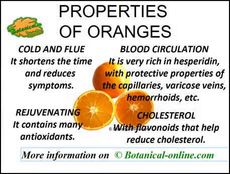 Properties and benefits of oranges