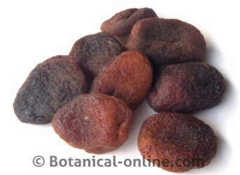 Dried apricots without sulfites