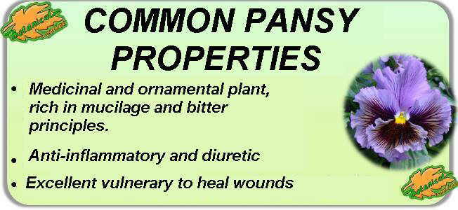 Main medicinal properties of common pansy.