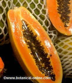 Open fruit of papaya