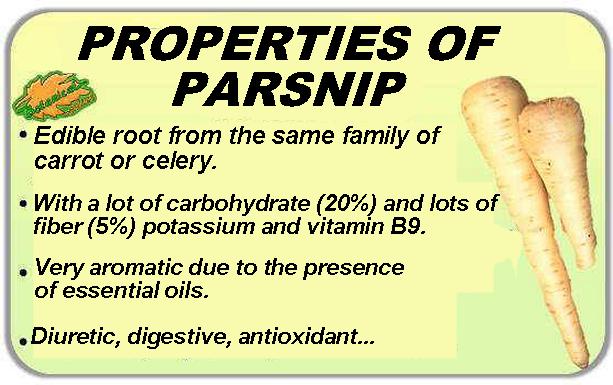 properties of parsnip parsnip sativa