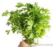 parsley rich in sulfur
