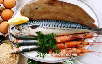 Oily fish and shellfish
