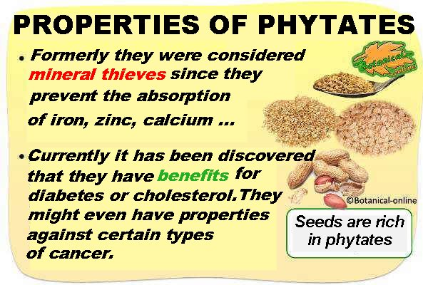 properties of phytates or phytic acid in food