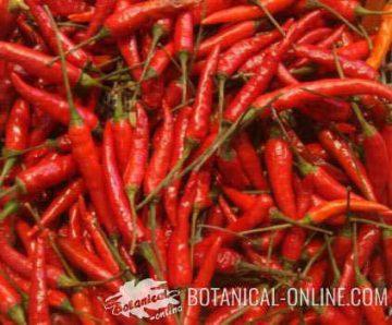 spicy pepper