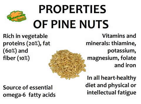 Some of the main properties of pine-nut