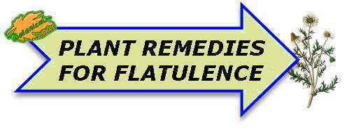 Plant remedies for flatulence