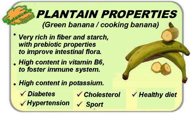 Plantain properties
