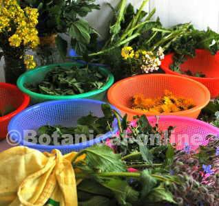 Varied wild edible plants